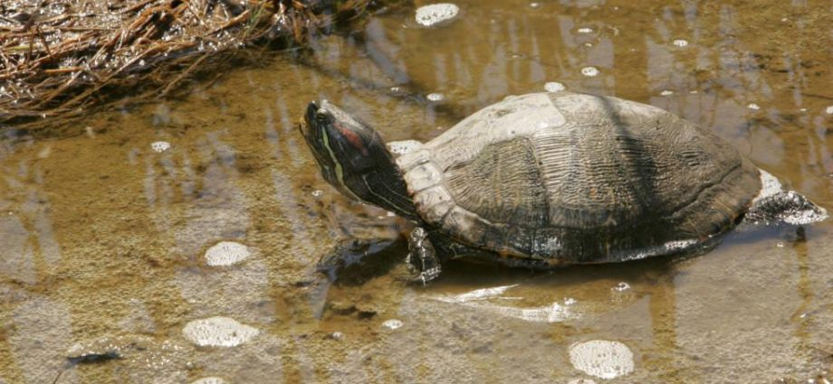 How To Maintain A Pet Dog Turtle