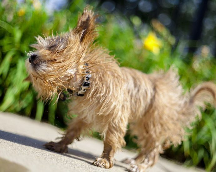 Are Ear Mites Dangerous to Dogs?